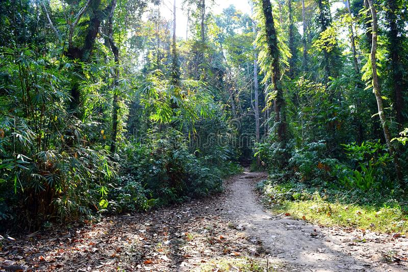Traînée de jungle - chemin à travers les arbres verts - forêt tropicale dans des îles d'Andaman Nicobar, Inde photos libres de droits