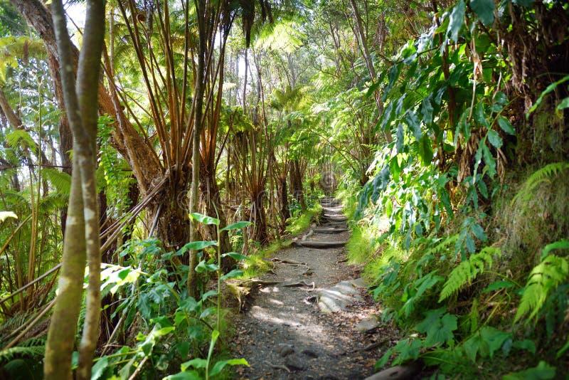 Traînée de Kilauea Iki en parc national de volcans en grande île d'Hawaï photographie stock libre de droits