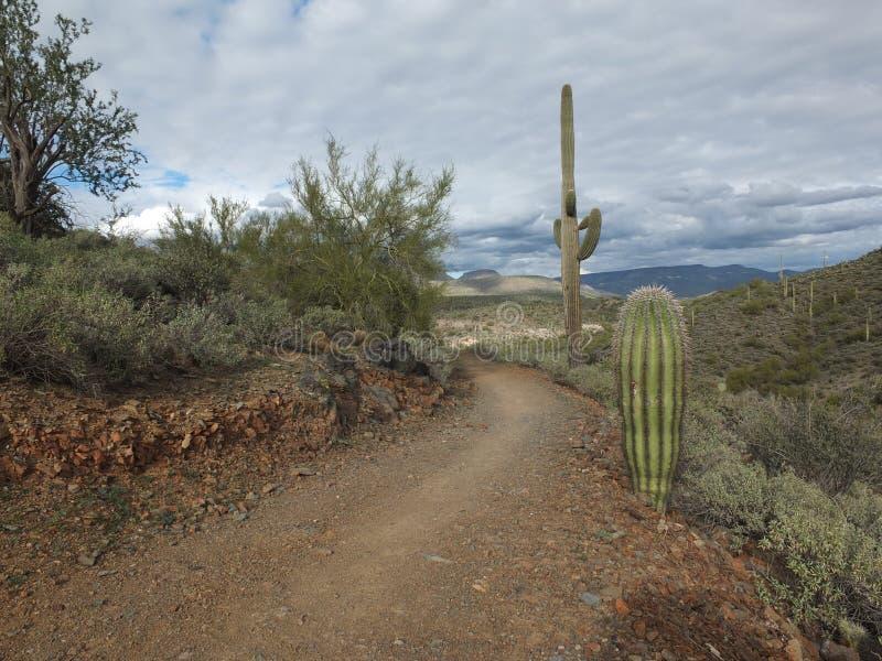 Traînée de l'Arizona image stock