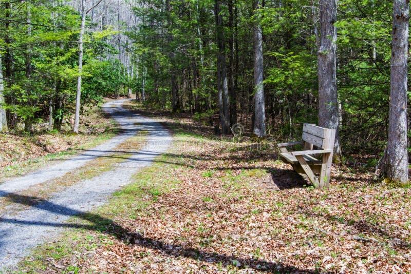 Traînée de marche dans les bois photographie stock libre de droits