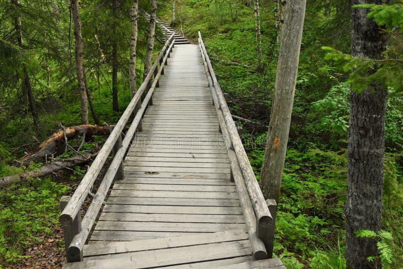 Traînée de marche en bois image libre de droits
