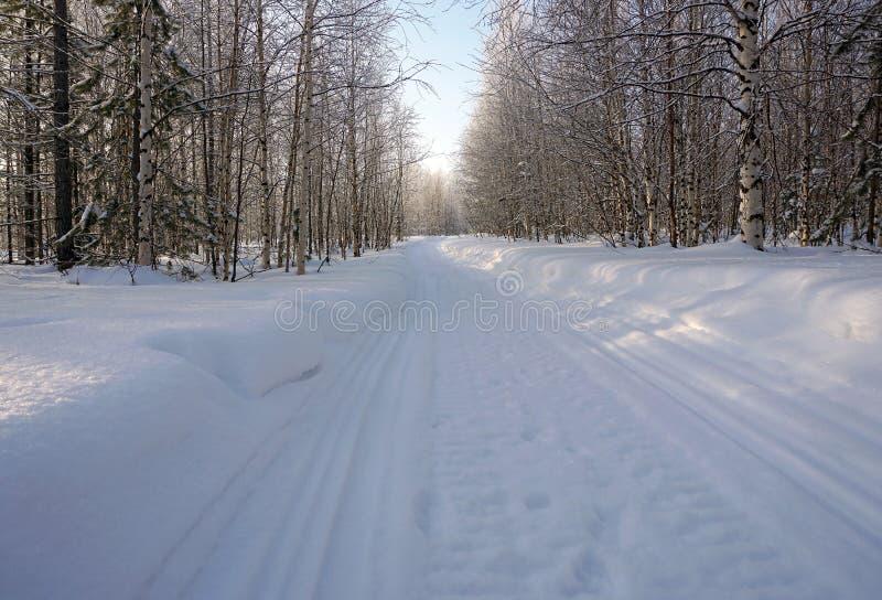 Traînée de motoneige dans la forêt d'hiver image libre de droits