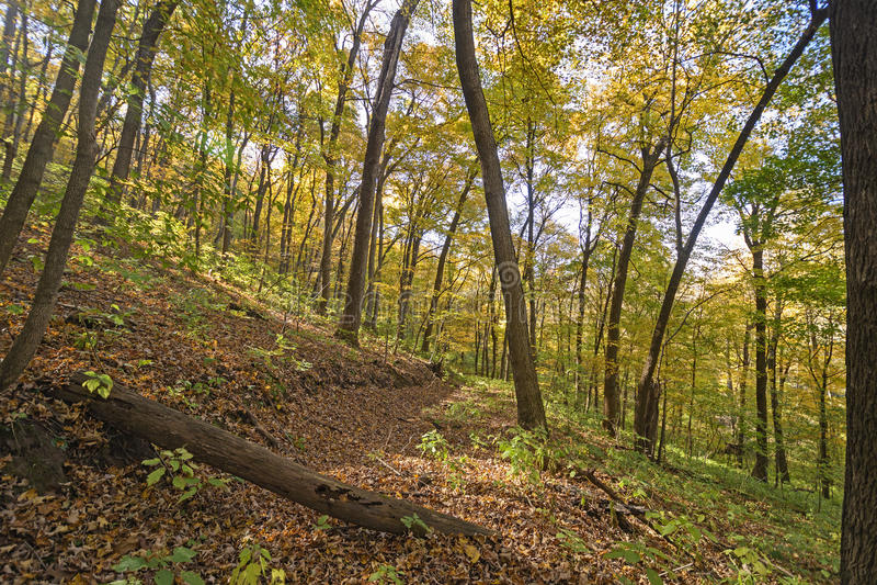 Traînée de région boisée en automne images libres de droits