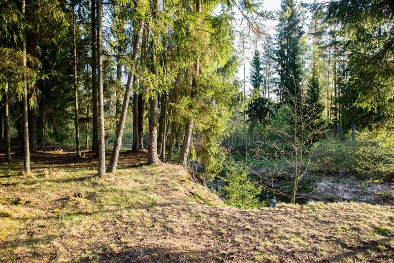 Traînée de touristes ensoleillée dans les bois en automne photo stock