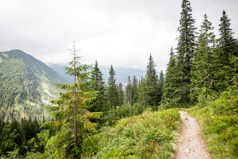 Traînée de touristes ensoleillée dans les bois en automne image libre de droits