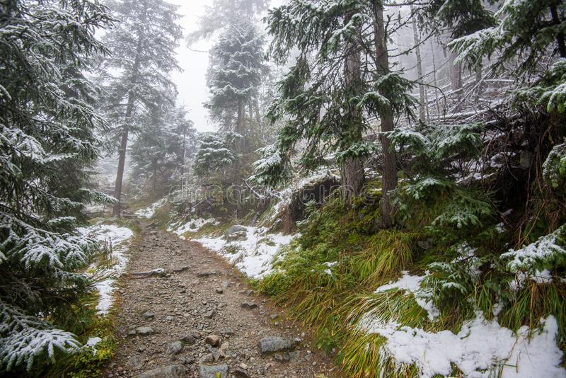 traînée de touristes de hausse humide humide avec des restes de neige des côtés image stock
