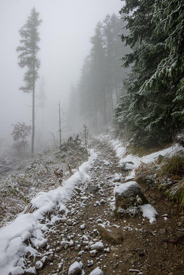 traînée de touristes de hausse humide humide avec des restes de neige des côtés image libre de droits