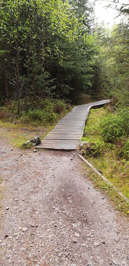 Traînée de vélo de montagne de promenade de conseil Support 7 traînées d'un mb en Dalbeattie Forest Kirkcudbrightshire Scotland image stock