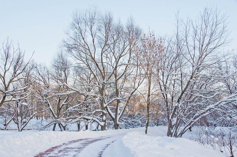 Traînée des pavés en parc d'hiver image stock