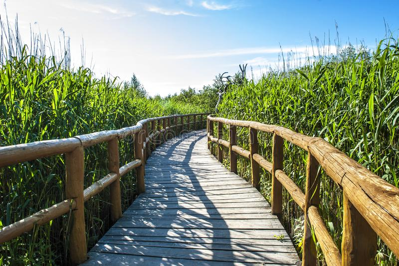 Traînée en bois de promenade image libre de droits