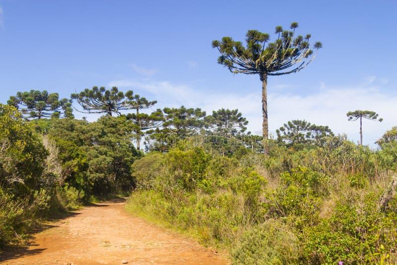 Traînée en canyon d'Itaimbezinho photographie stock libre de droits