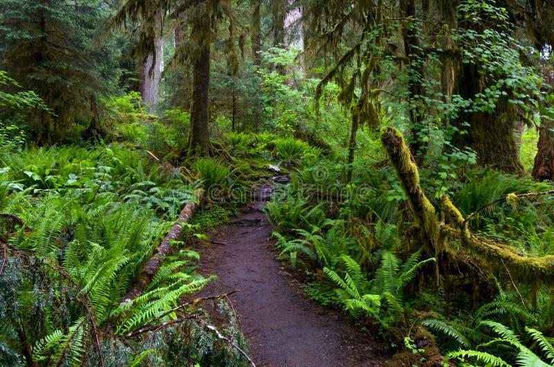 Traînée en Hoh Rainforest, parc national olympique photo stock