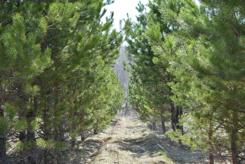 Traînée entre les arbres menant à la beauté photos libres de droits