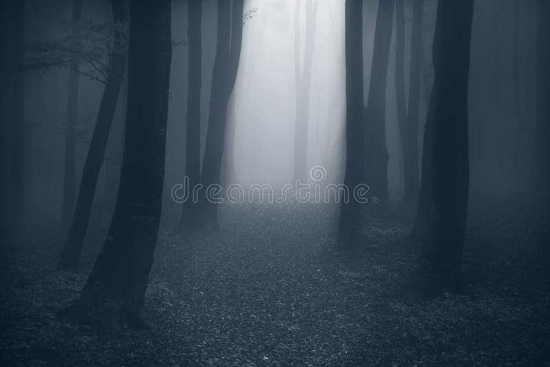 Traînée mystique par le brouillard photos libres de droits