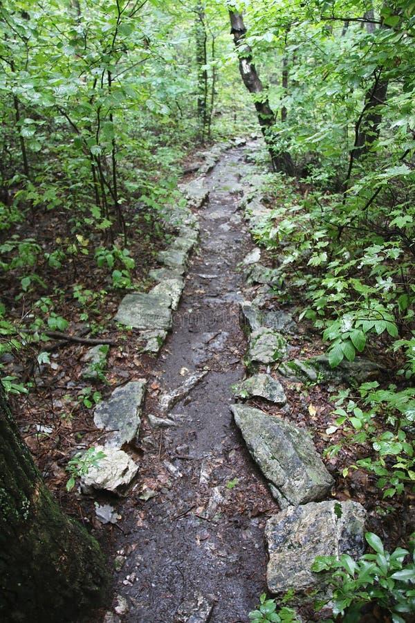 Traînée par la montagne boisée photo libre de droits