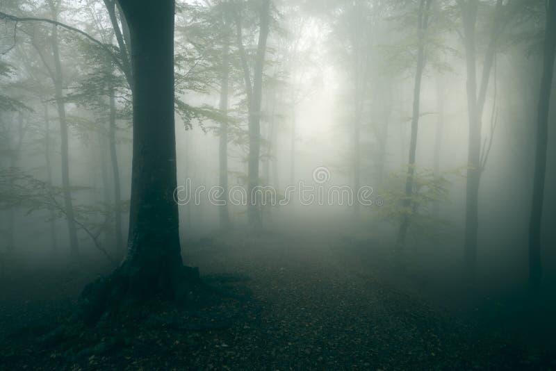 Traînée rampante dans la forêt brumeuse foncée images stock