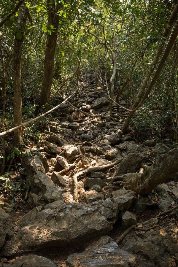 Traînée rocheuse entrant vers le haut à la nuance des arbres images libres de droits