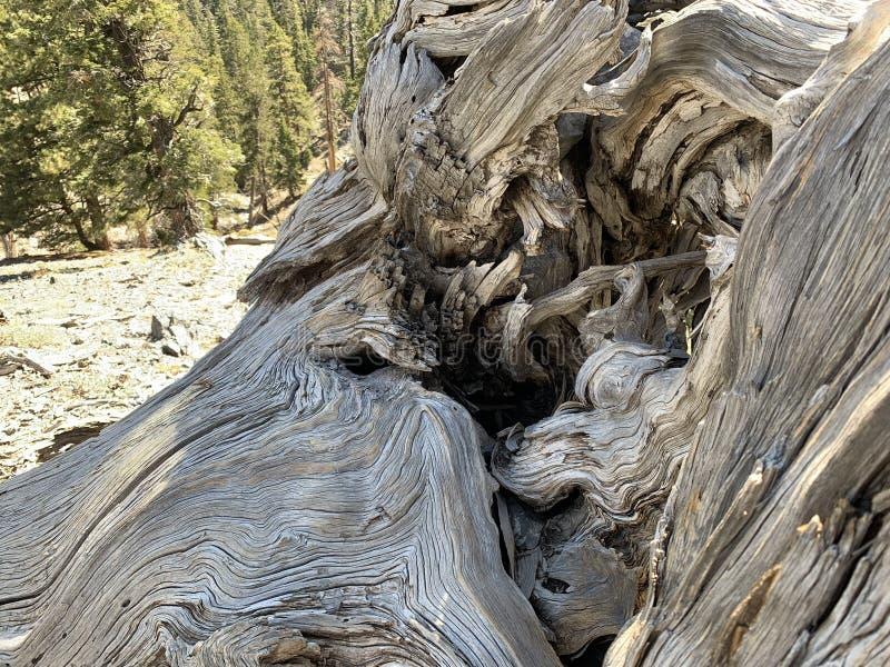 Traînée supérieure de boucle de Bristlecone, Mt Charleston, Nevada photos libres de droits