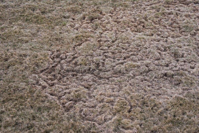Traînées dans la pelouse après le snowmelt créé par des rongeurs pendant l'hiver photo stock