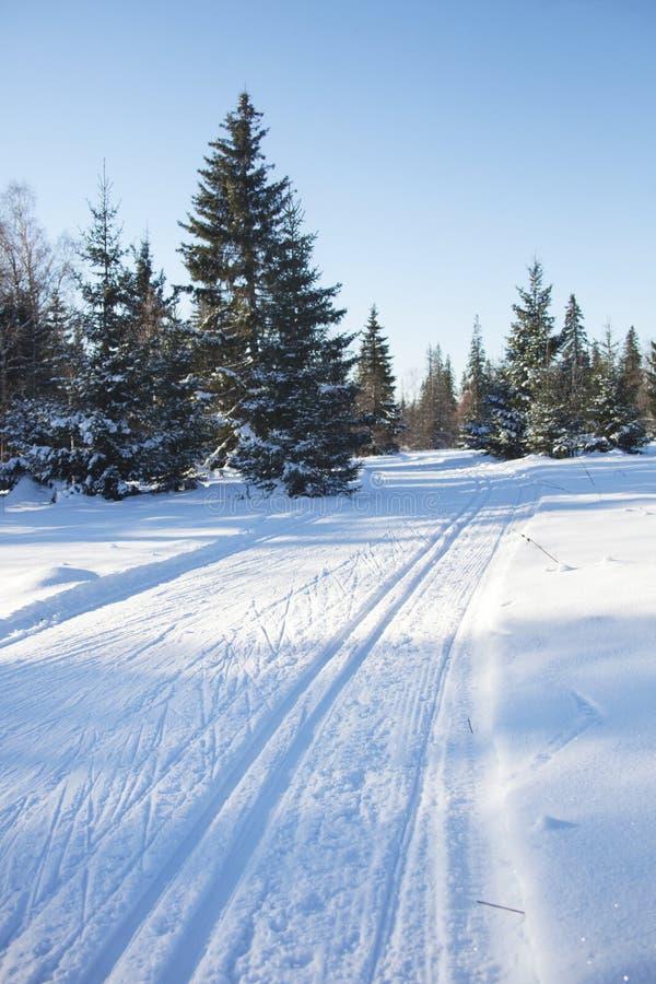 Traînées dans le paysage d'hiver de forêt images stock