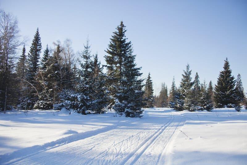Traînées dans le paysage d'hiver de forêt photos stock