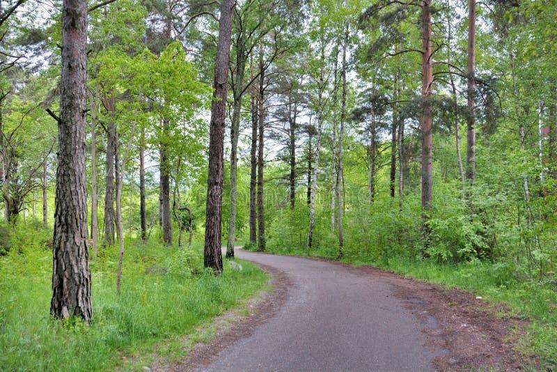 Traînées de forêt sur Upsal Suède photos libres de droits