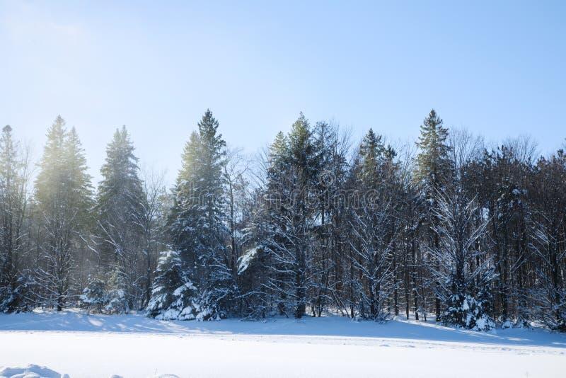 Traînées de ski de fond Forêt de l'hiver couverte de neige photo libre de droits