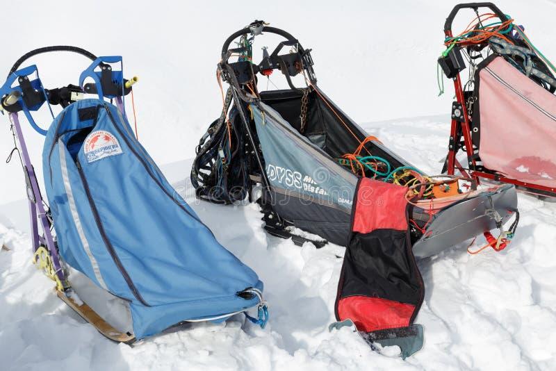 Traîneau de traîneau de chien de sports ou de chien pour des disciplines de sports de neige - courses de chien de traîneau photo libre de droits