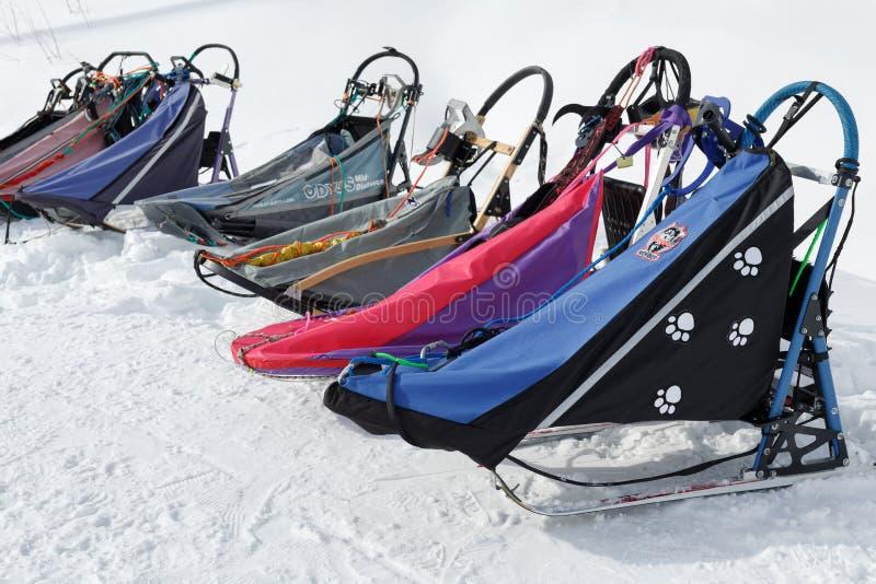 Traîneau de chien de sports ou traîneau de chien pour des disciplines de sports de neige - emballage de chien de traîneau photos stock