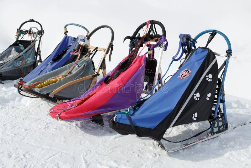 Traîneau de traîneau de chien de sports ou de chien pour des disciplines de sports de neige - poursuivez l'emballage de traîneau photo libre de droits