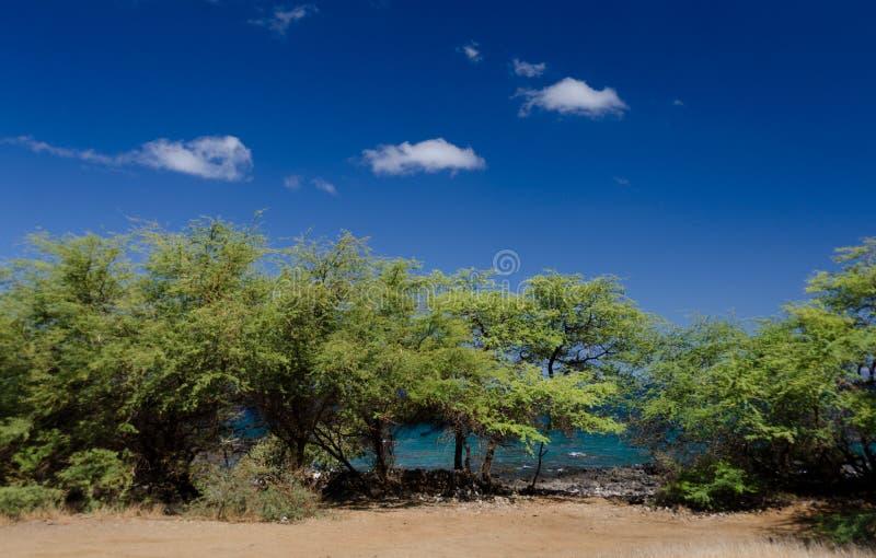 Traînez à la ligne de côte entre Waialea et Hapuna image libre de droits