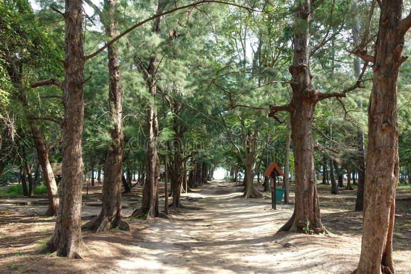 traînez à la manière de Leamsala à la caverne Hua Hin voisin, Tha de Phraya Nakorn image stock