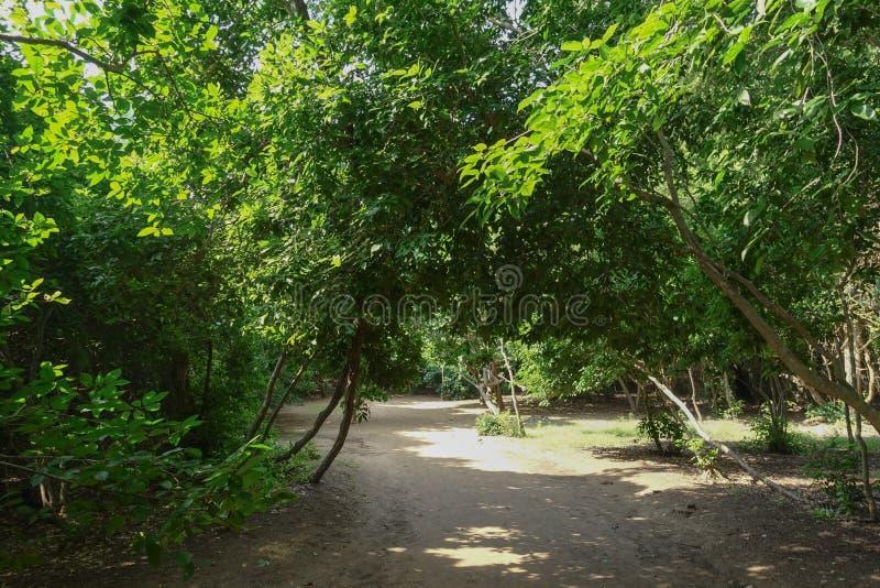 traînez à la manière de Leamsala à la caverne Hua Hin voisin, Tha de Phraya Nakorn photos libres de droits