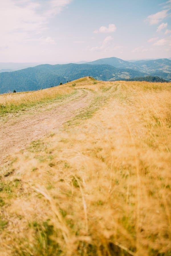 Traînez aller à travers le champ jauni avec Forest Hills brumeux sous le ciel nuageux comme fond photographie stock libre de droits