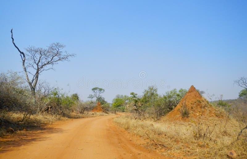 Traînez au milieu du nid de buisson et de termite, Kruger, Afrique du Sud image libre de droits