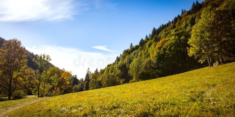 Traînez avec des collines et des champs dans la forêt noire photo libre de droits