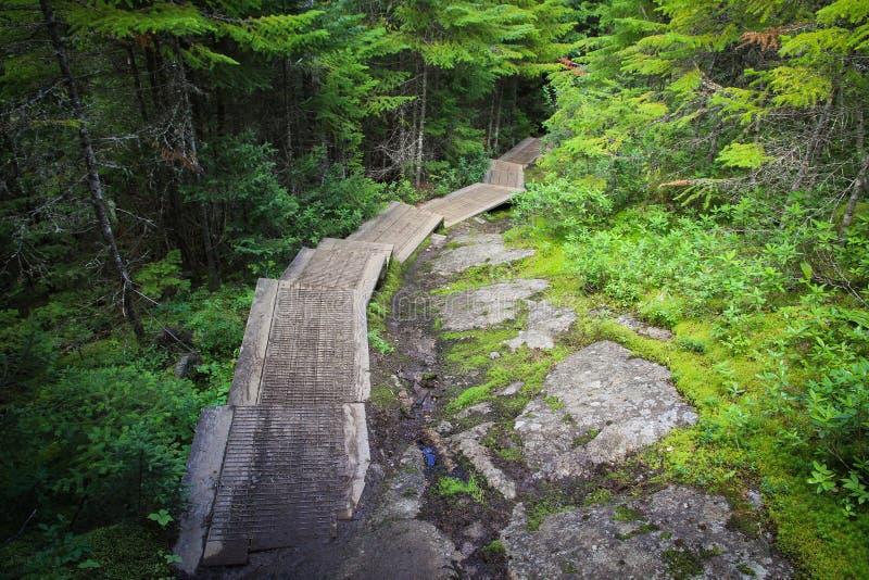 Traînez avec des escaliers menant dans la forêt photographie stock