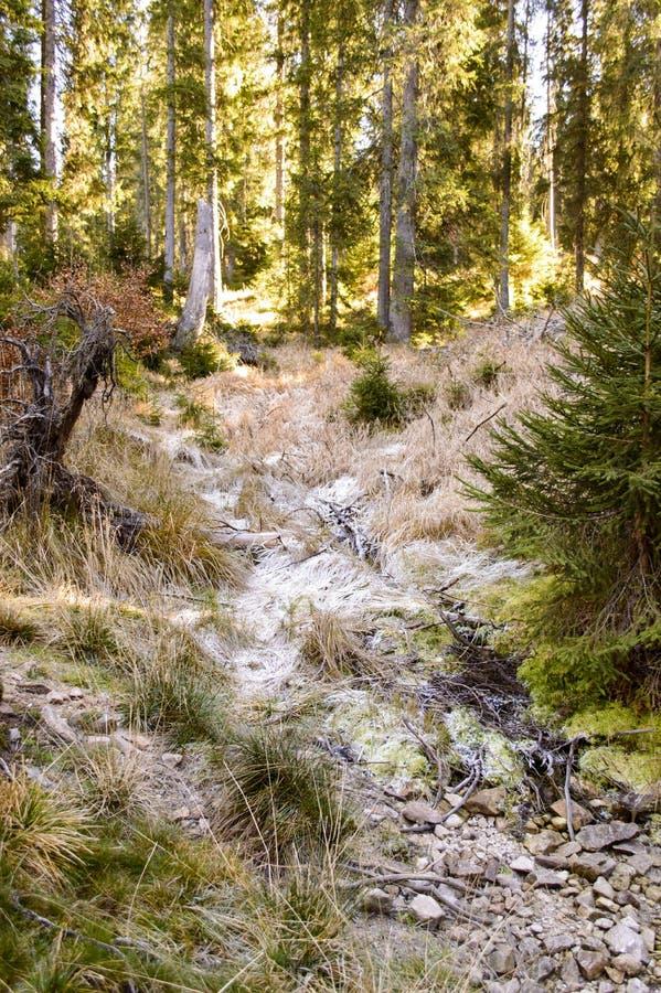 Traînez avec l'herbe congelée par la forêt d'automne photo stock