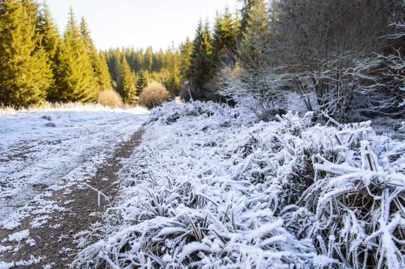 Traînez avec l'herbe congelée par la forêt d'automne image stock
