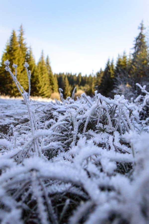 Traînez avec l'herbe congelée par la forêt d'automne photo libre de droits