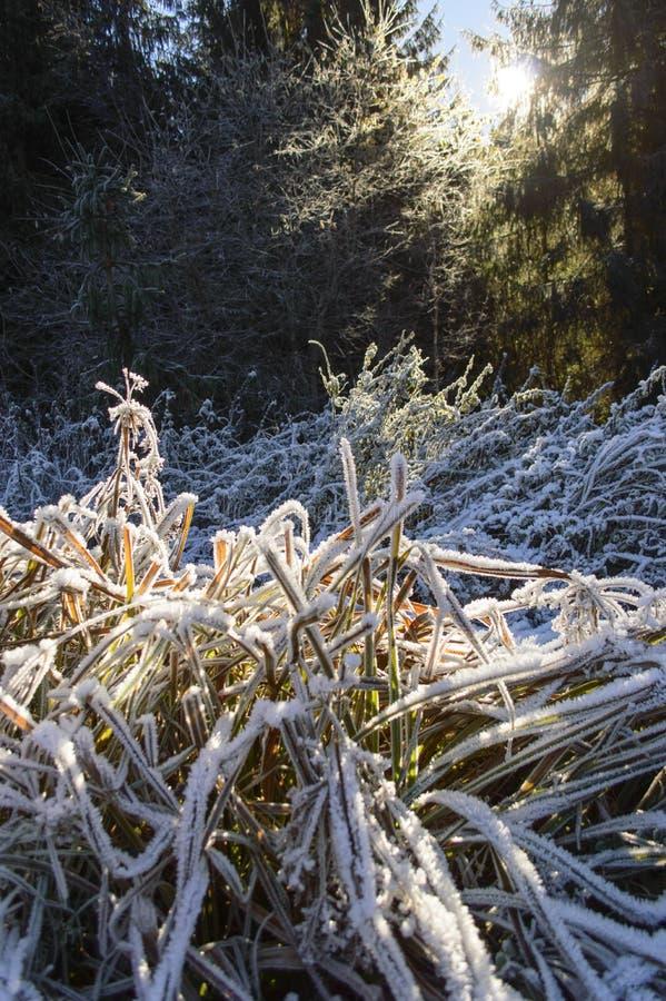 Traînez avec l'herbe congelée par la forêt d'automne photographie stock