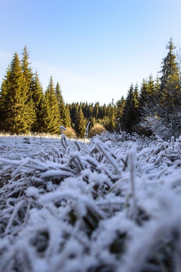 Traînez avec l'herbe congelée par la forêt d'automne photos stock
