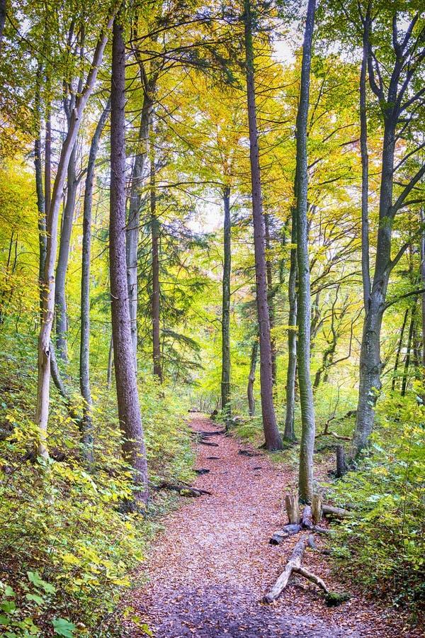 Traînez avec le feuillage dans une forêt en automne images stock