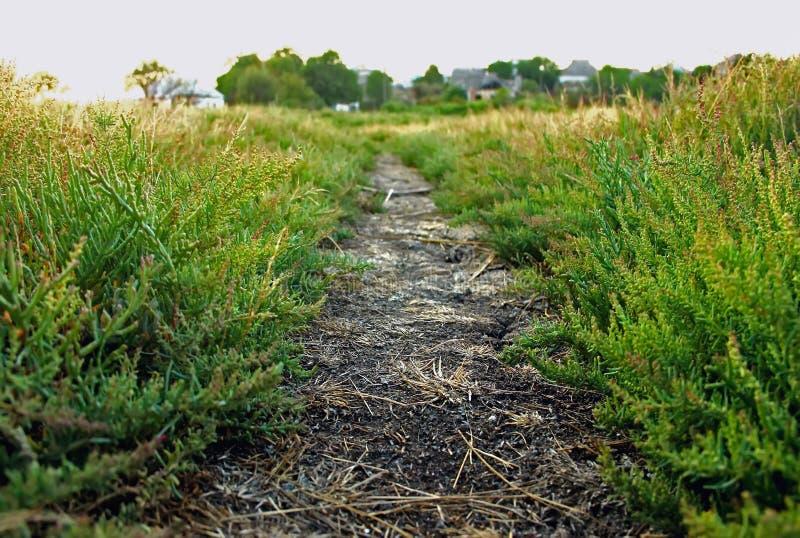 traînez, chemin de saleté avec l'herbe entre dans la distance, photos stock