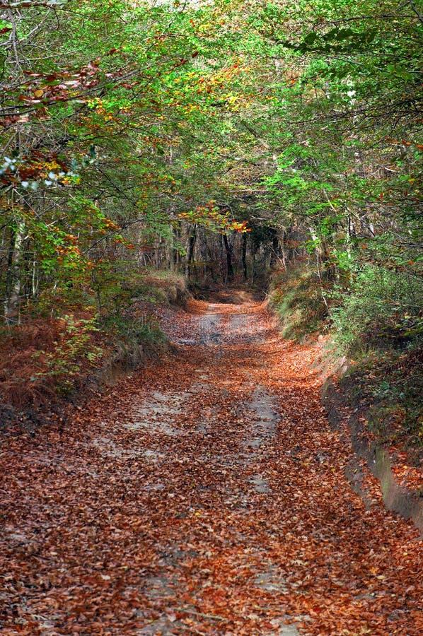 Traînez dans la forêt avec des feuilles au sol photos libres de droits