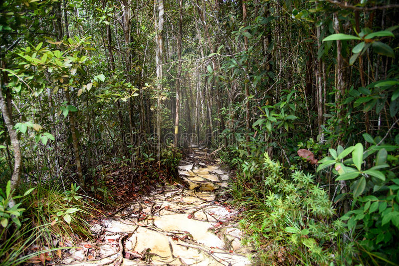 Traînez dans la forêt tropicale au parc national de Bako photos stock