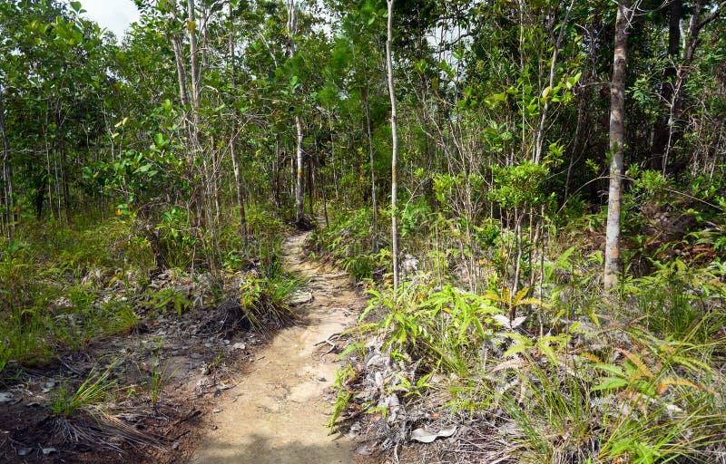 Traînez dans la forêt tropicale au parc national de Bako photo stock