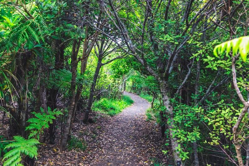 Traînez dans la forêt tropicale d'île du nord, Nouvelle-Zélande image libre de droits