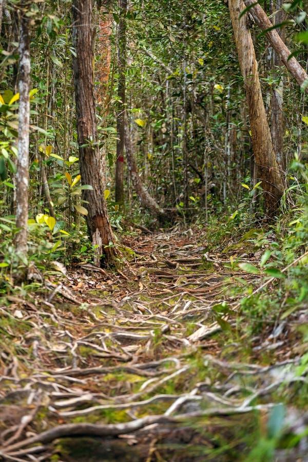 Traînez dans la forêt tropicale, parc national de Bako photos stock