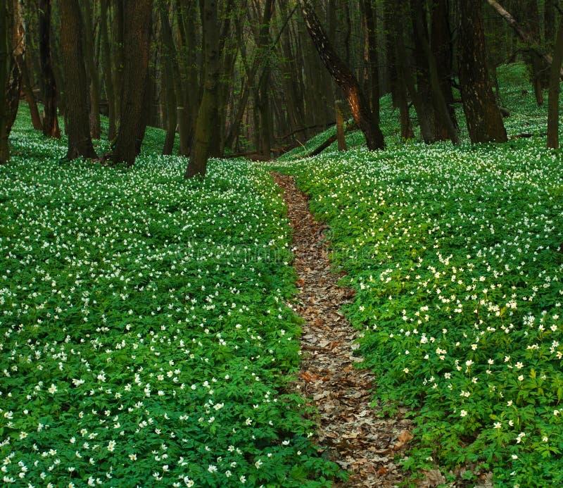 Traînez dans la forêt verte de floraison, nature de ressort photos stock